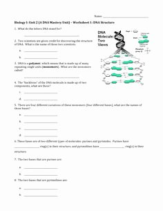Dna Structure Worksheet Answer Key Fresh Simple Genetics Practice Problems Worksheet
