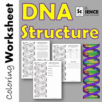 Dna Structure Worksheet Answer Key Lovely Dna Structure Double Helix Coloring Printable Worksheet