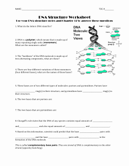 Dna Structure Worksheet Answer Key New Worksheet 1 Dna Structure