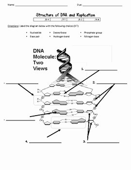 Dna Structure Worksheet Answer Key Unique Dna Structure and Replication Worksheet by Scientific