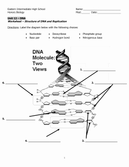Dna Structure Worksheet Answer Luxury Studylib Essys Homework Help Flashcards Research
