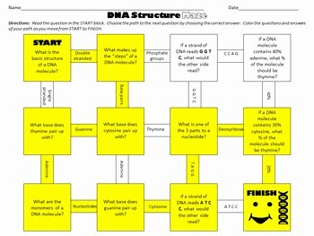 Dna Structure Worksheet Answer New Dna Structure Maze Worksheet for Review or assessment by