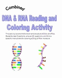 Dna the Double Helix Worksheet Beautiful 1000 Images About Dna & Rna On Pinterest