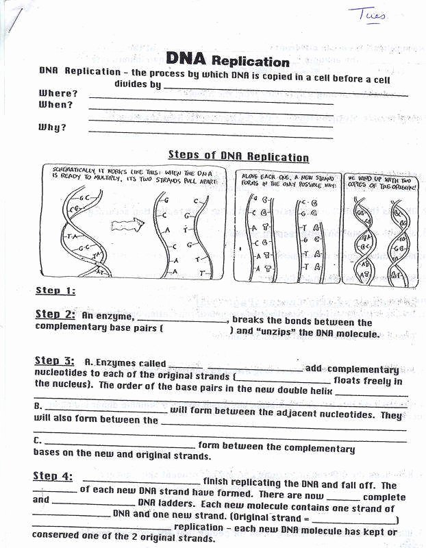 Dna the Double Helix Worksheet Inspirational Dna Worksheet