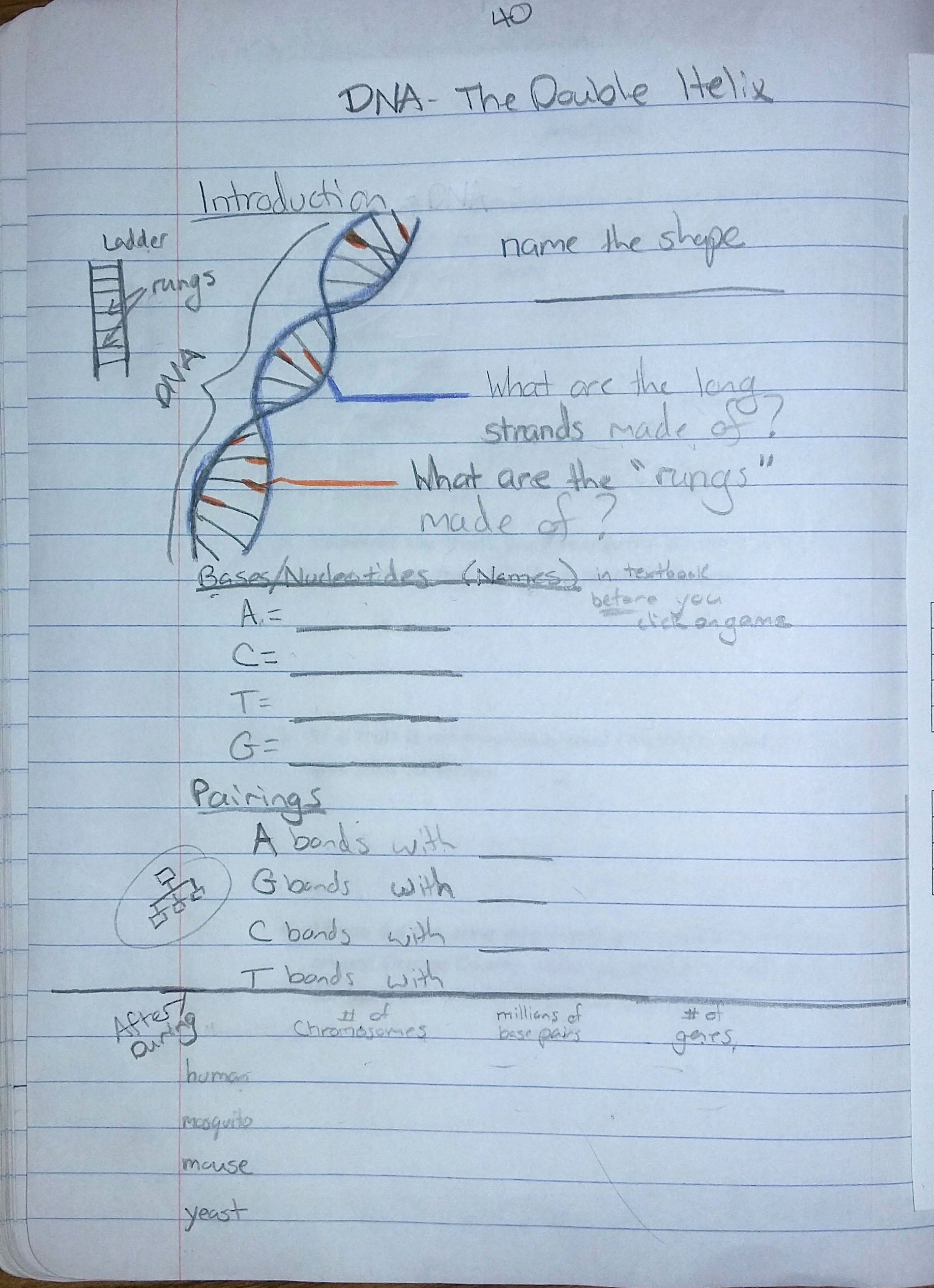 Dna the Double Helix Worksheet Lovely Armstrong Valerie Genetics