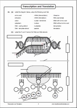 Dna Transcription and Translation Worksheet Beautiful Transcription and Translation by Good Science Worksheets