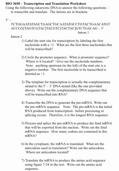 Dna Transcription and Translation Worksheet Fresh solved Bio 3650 Transcription and Translation Worksheet