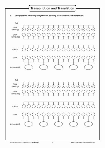 Dna Transcription and Translation Worksheet Lovely Transcription and Translation Worksheet