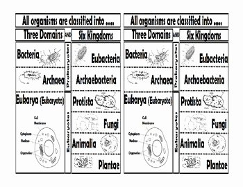 Domains and Kingdoms Worksheet Beautiful Domains and Kingdoms Foldable by Sciencerly