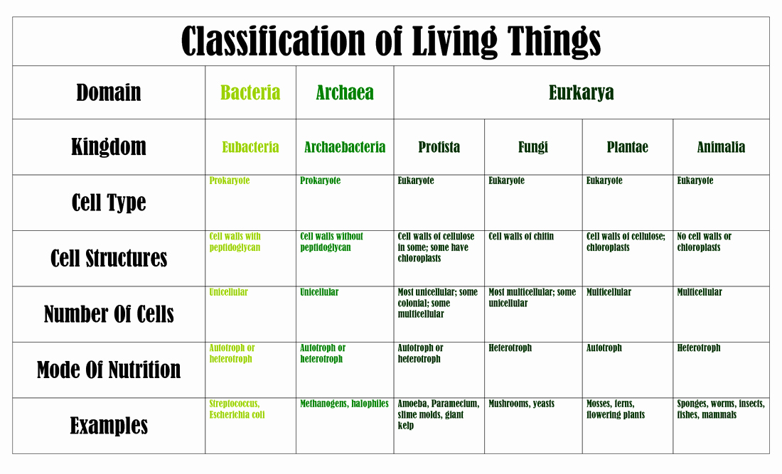 Domains and Kingdoms Worksheet Luxury Classification Of Living Things Michelleburden