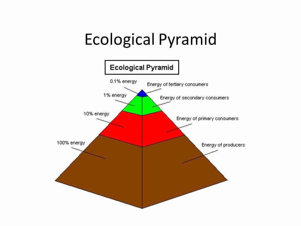 Ecological Pyramids Worksheet Answer Key Awesome Ecological Pyramids Worksheet