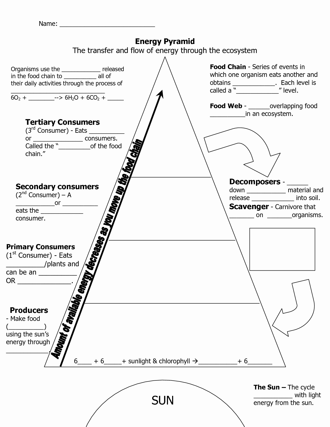 Ecological Pyramids Worksheet Answer Key Fresh Ecological Pyramid Worksheet Energy Pyramid Worksheets
