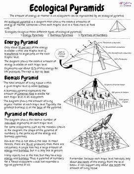 Ecological Pyramids Worksheet Answer Key Fresh Ecological Pyramids by Cell Fie Science