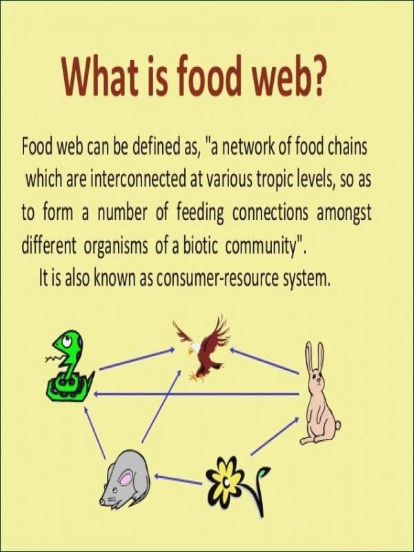 Ecological Pyramids Worksheet Answer Key Fresh Ecological Pyramids Worksheet Answers