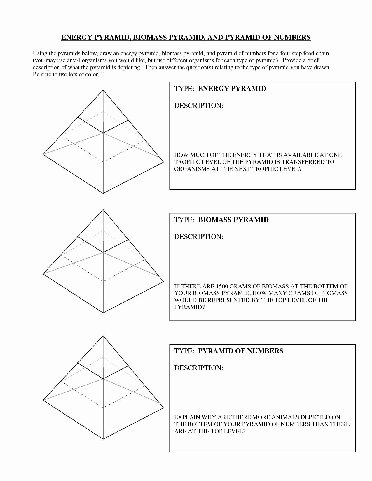 Ecological Pyramids Worksheet Answer Key Inspirational 13 Best Of Ecological Pyramids Worksheet Answer Key