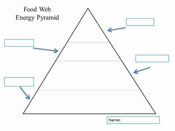 Ecological Pyramids Worksheet Answer Key Lovely Ecological Pyramids Worksheet