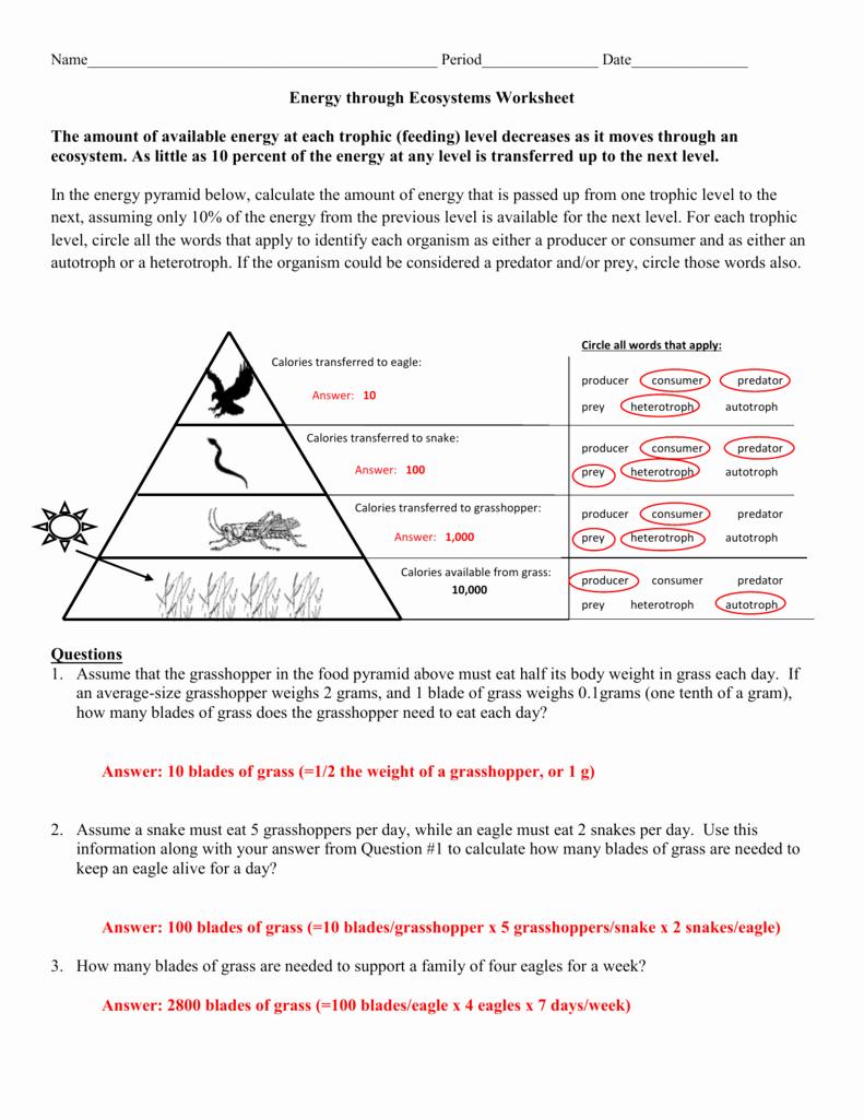 Ecological Pyramids Worksheet Answer Key Lovely Worksheet Trophic Levels Worksheet Worksheet Fun