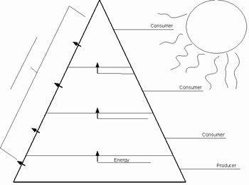 Ecological Pyramids Worksheet Answer Key New Ecological Pyramid Worksheet by Christopher Morris