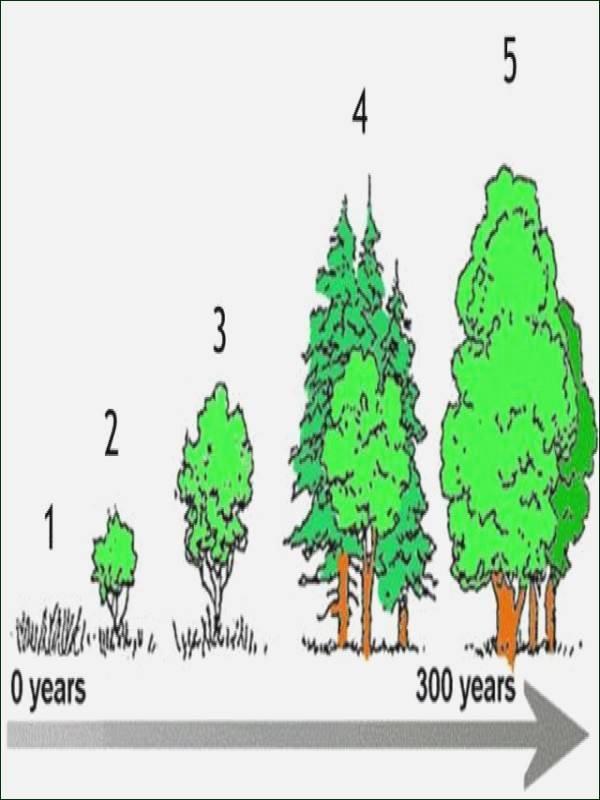 Ecological Pyramids Worksheet Answer Key Unique Ecological Pyramids Worksheet Answers