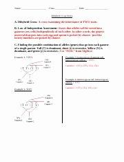 Ecological Pyramids Worksheet Answer Key Unique Pogil Answers Ecology Ecology Pyramids 1 A Sunlight B