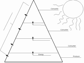 Ecological Pyramids Worksheet Answers Awesome Ecological Pyramid Worksheet by Christopher Morris