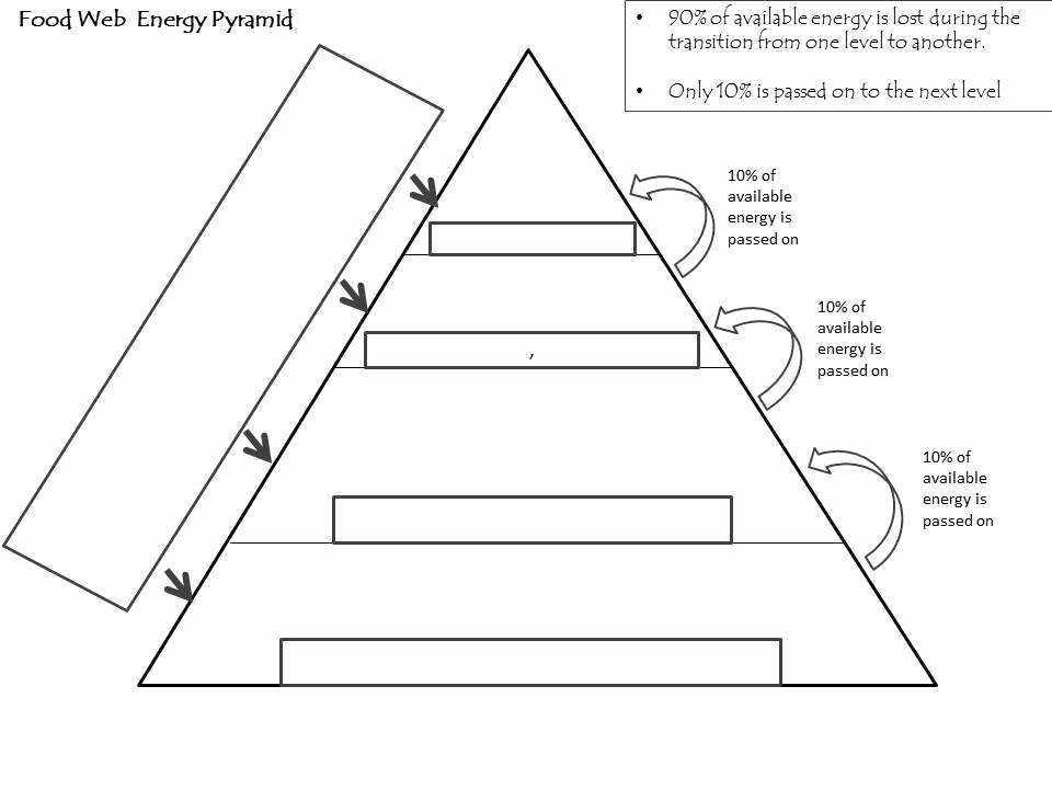 Ecological Pyramids Worksheet Answers Awesome Ecological Pyramids Worksheet