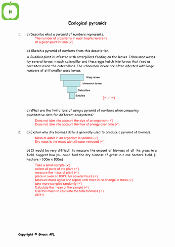 Ecological Pyramids Worksheet Answers Beautiful Biology Revision Worksheets Covering Year 2 A2 Biology by