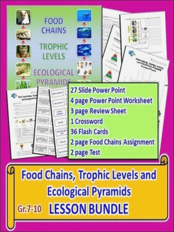 Ecological Pyramids Worksheet Answers Best Of Ecological Pyramids Worksheet Answers