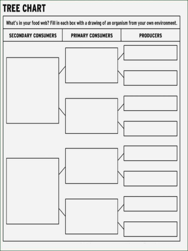 Ecological Pyramids Worksheet Answers Elegant Ecological Pyramids Worksheet Answers