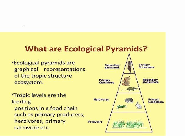 Ecological Pyramids Worksheet Answers Lovely Ecological Pyramids Worksheet