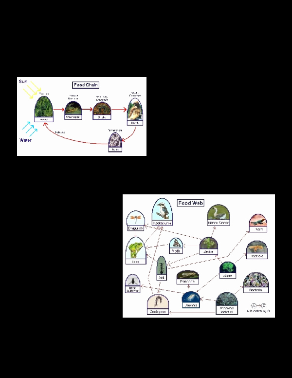 Ecological Pyramids Worksheet Answers New Doc Ecological Pyramids Worksheetc