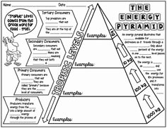 Ecological Pyramids Worksheet Answers New Ecological Pyramid Worksheet Energy Pyramid Worksheets