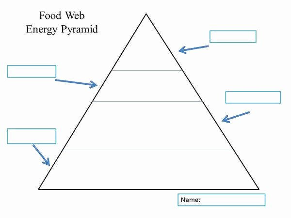Ecological Pyramids Worksheet Answers New Ecological Pyramids Worksheet