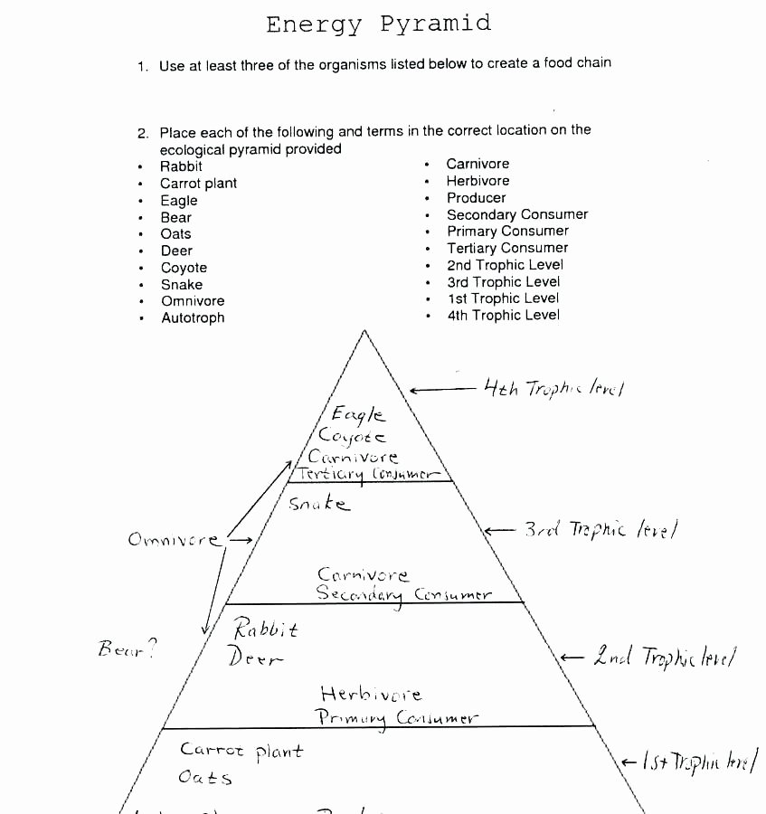 Ecological Pyramids Worksheet Answers New Energy Pyramid Worksheet Energy Etfs