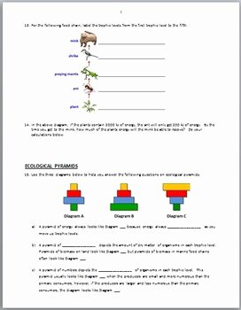 Ecological Pyramids Worksheet Answers New Food Chains Review Worksheet Editable by Tangstar