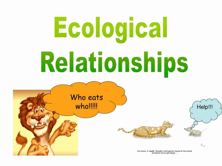 Ecological Relationships Worksheet Answers Luxury Ppt Ecological Relationships Powerpoint Presentation