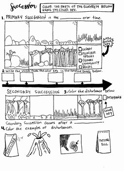 Ecological Succession Worksheet Answer Key New Primary and Secondary Succession by Scientifically