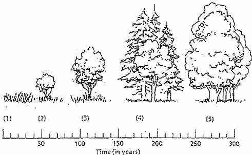 Ecological Succession Worksheet Answers Best Of Examining the Stages Of Succession