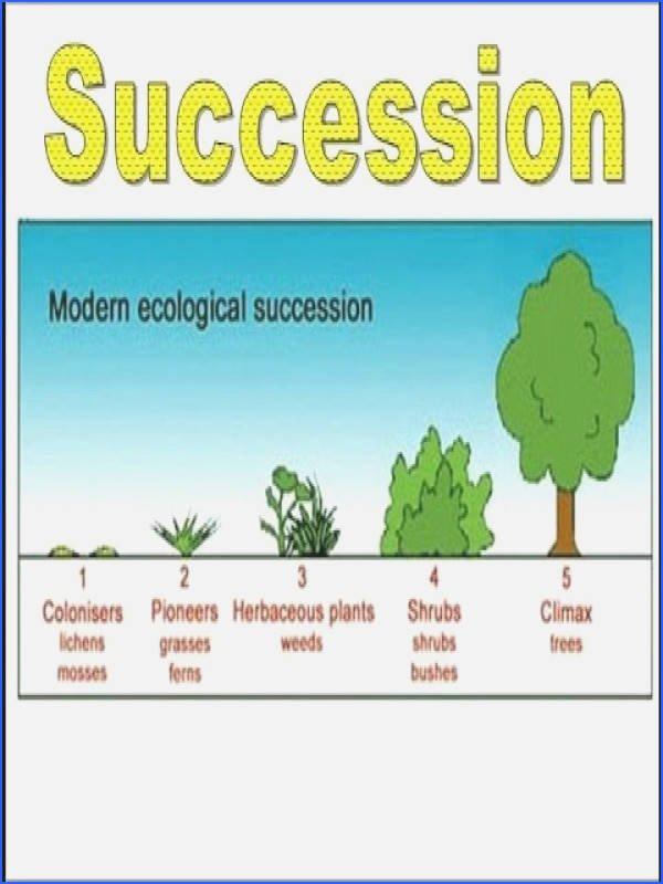 Ecological Succession Worksheet High School Fresh Ecological Succession Worksheet
