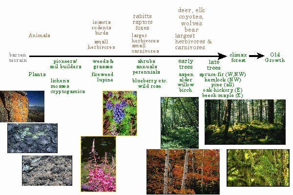 Ecological Succession Worksheet High School Inspirational Ecological Succession Worksheet