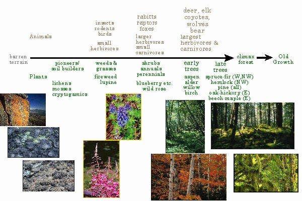 Ecological Succession Worksheet High School Inspirational Ecological Succession Worksheet