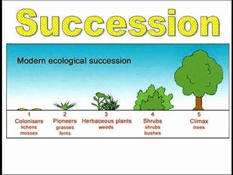 Ecological Succession Worksheet High School Unique Ecological Succession Worksheet