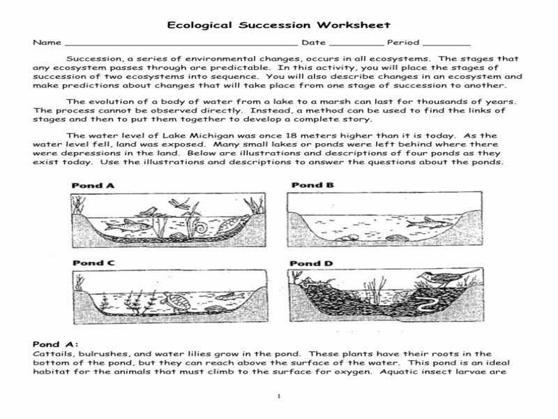 Ecological Succession Worksheet High School Unique Ecological Succession Worksheet Pond Key Free Printable