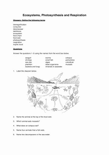 Energy Flow In Ecosystems Worksheet Awesome Energy Flow In Ecosystems Guiding Questions Worksheet