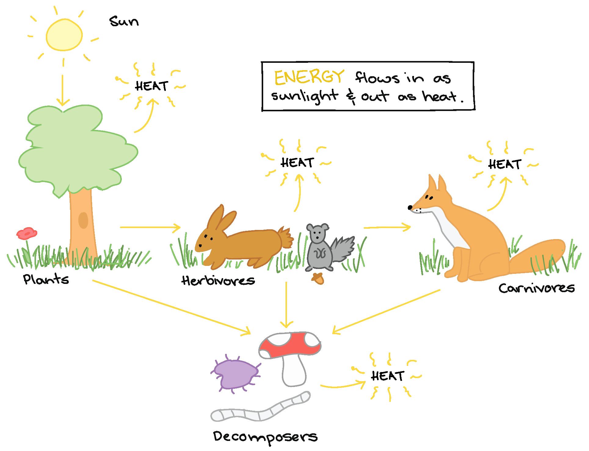 Energy Flow In Ecosystems Worksheet Beautiful Energy Flow In An Ecosystem Worksheet Answers Biozone