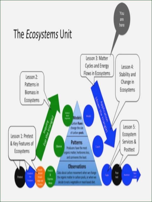 Energy Flow In Ecosystems Worksheet Elegant Energy Flow In Ecosystems Worksheet