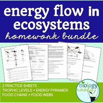 Energy Flow In Ecosystems Worksheet Fresh Ecology Energy Flow In Ecosystems by Biology Roots