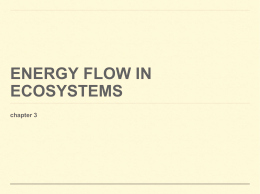 Energy Flow In Ecosystems Worksheet Fresh Ecology Review Worksheet 2