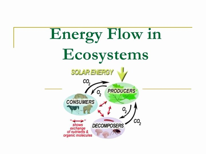 Energy Flow In Ecosystems Worksheet Fresh Ppt Energy Flow In Ecosystems Powerpoint Presentation