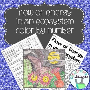 Energy Flow In Ecosystems Worksheet Lovely 1000 Images About Tpt Science Lessons On Pinterest